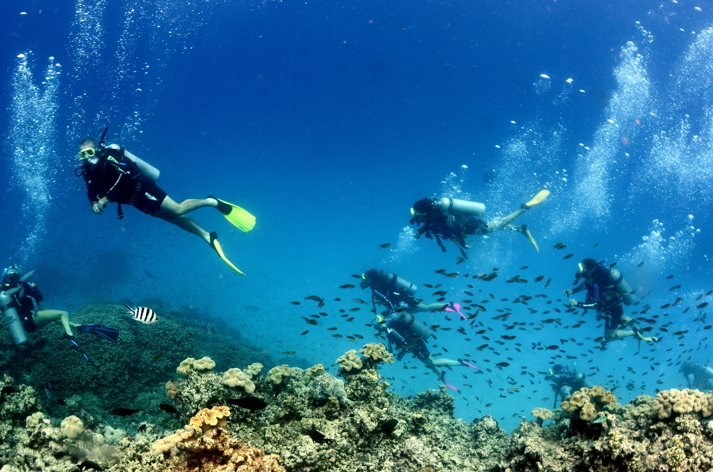 reefs day debacle - photo #31
