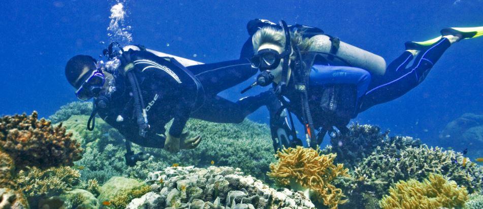 scuba diving day tour