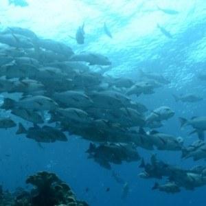 great-barrier-reef-school
