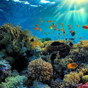 Saxon Reef